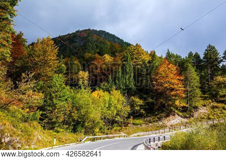 Golden Autumn in Slovenia. Europe. Asphalt road in the mountain range, spur of the Julian Alps. Huge eagle are circling in search of prey.