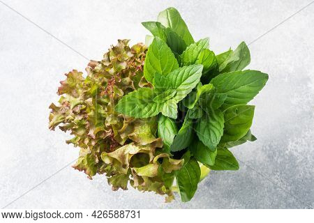 Fresh Basil Leaves, Mint And Lettuce. A Bouquet Of Fragrant Herbs And Spices.