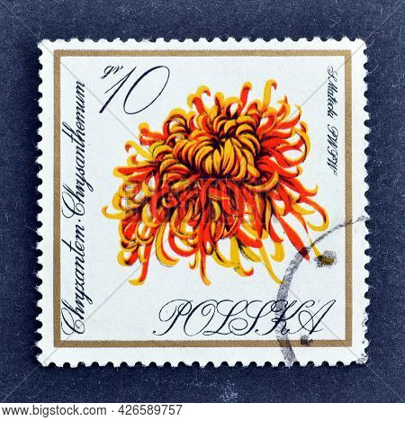 Poland -circa 1964 : Cancelled Postage Stamp Printed By Poland, That Shows Persian Chrysanthemum Flo