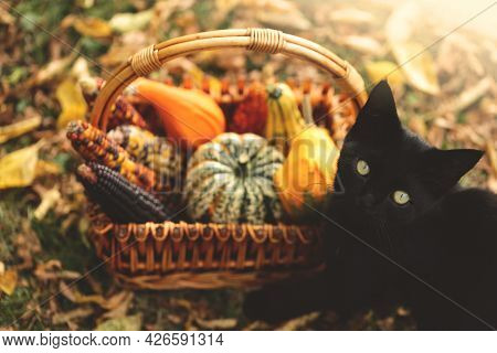 Autumn Time. Black Cat With A Basket Of Vegetables. Halloween And Thanksgiving Holidays. Pumpkins, C
