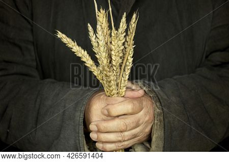 The Poor Peasant Man Holds Wheat Sprouts