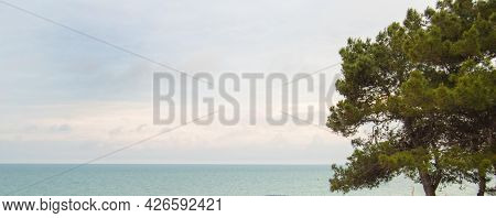 Pine Branches Against The Background Of The Turquoise Sea And The Dawn Overcast Sky With Clouds, Med