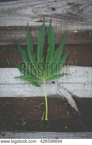 Large, Beautiful Cannabis Leaf On A Wooden Background. Image For Design.