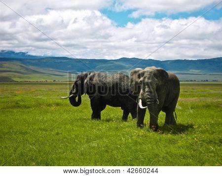 Two Elephants at Ngorongoro