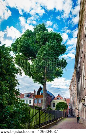 06 July 2021, Leiden, Netherlands, Cloudy Summer Day And High Green Tree And Red Facades