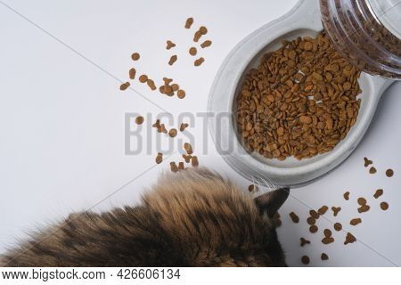 Top View Cat Dry Food Bits, Bowl Full With Dry Pet Food And Maine Coon Cat Enjoy Eating On White Bac