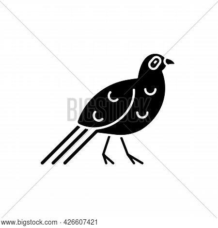 Bird Black Glyph Icon. Mikado Pheasant. Taiwanese Aborigines Head Decoration. Taiwan Mountainous Reg
