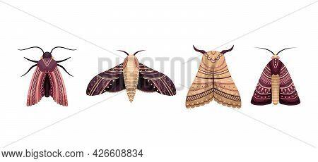 Vector Set Of Flat Moths In Boho Style. Flat Illustration.