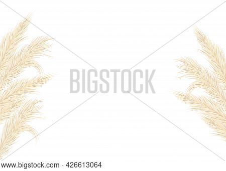 Background Of Dry Pampas Grass .floral Ornamental Elements In Boho Style. Flat Lay With Copy Space,