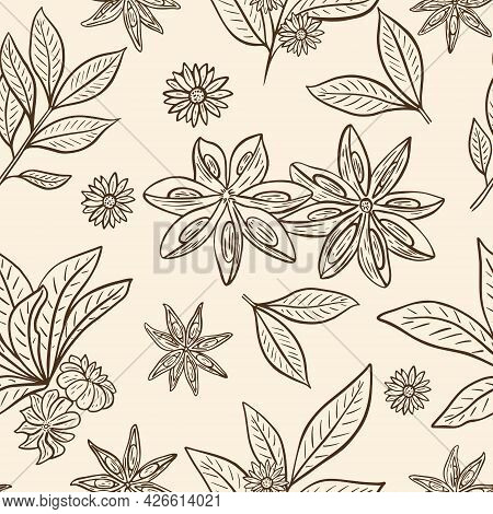 Star Anise Seamless Vintage Pattern, Vector Illustration. Background With A Sketch Of Pods, Leaves A