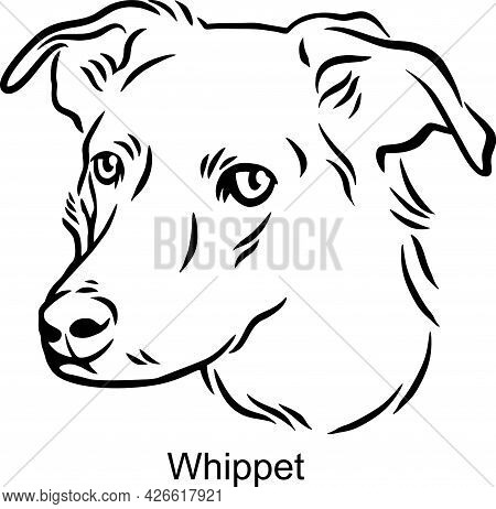 Whippet Portrait Dog In Line Style - Pet Portrait In Light Style Head Isolated On White