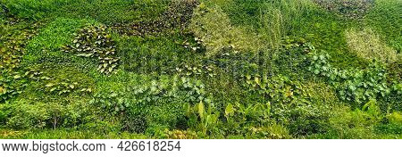 Natural Green Wallpaper And Background. Nature Wall.