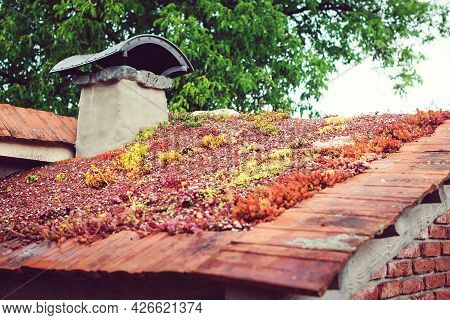 Roof With Sedum. Eco Friendly Building. Green Ecological Sod Roof On Wooden Building.