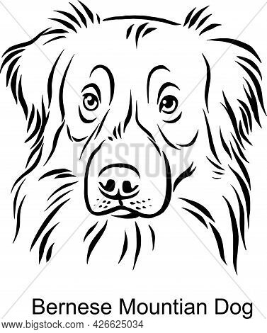 Bernese Mountain Dog Portrait Dog In Line Style - Pet Portrait In Light Style Head Isolated On White