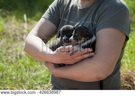 Two Cute Puppies In The Arms Of A Young Woman. Woman Up With Puppies In Hugs. Little Dogs For A Walk