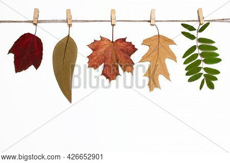 Autumn Background With Leaves On Clothespins, A Herbarium Of Fallen Colorful Leaves, Autumn Mood,