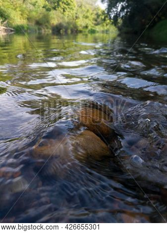 Close Up Detail Of Clear Water Flow Over Orange Stones In Shallow River