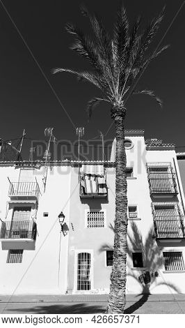 Black And Image Of Typical Mediterranean Apartments With Tall Palm Tree Cast Shadow Across And Up Wa