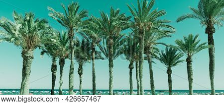 Retro Tones On Row Of Tropical Feeling Luxuriant  Palm Trees Against  Sky