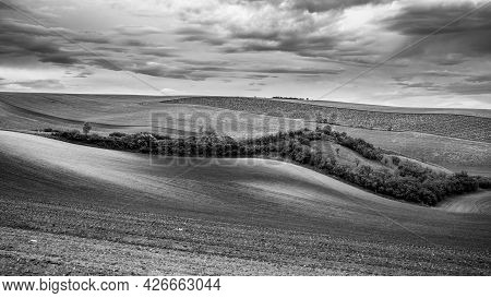Wavy Agricultural Field Of Moravian Tuscany. Black And White Image.