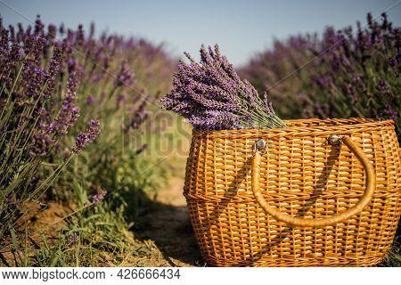 Basket With Lavender Bouquet On Lavender Field Background