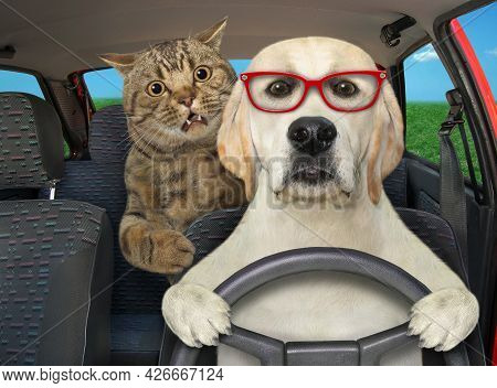 A Dog Labrador In Glasses With His Cat Is Driving A Auto On The Highway.