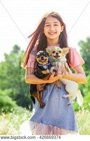 Young Girl And Dogs. Two Chihuahua Dogs In Arms. Walking With Pets. Outdoor