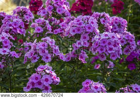 A Close Up Of A Purple Flower With Hulda Klager Lilac Gardens In The Background