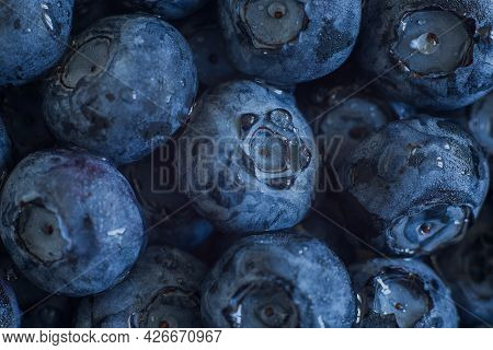 Ripe Sweet Blueberry. Summer Berry. Blueberry Are A Useful Berry, Which Has A Lot Of Vitamins. Macro