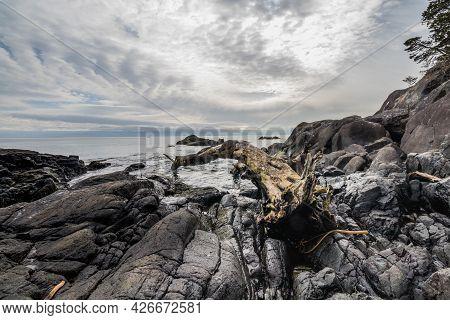 Driftwood Log On The Rocky Coast Of The Salish Sea On The Coast Trail At East Sooke Regional Park In