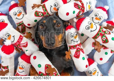 Portrait Of Lovely Puppy Lying In Bed, Toys In Shape Of Snowmen Scattered Around And Piled On Pet, T