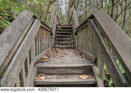 Straight Stairway With Central Landing And Handrailings In The Forest Of Tacoma In Washington