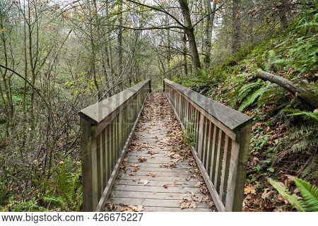 Straight Wooden Footpath In The Middle Of The Woods In Tacoma, Washington