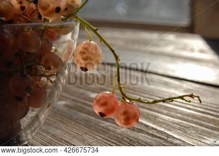 Close-up Of A Sprig Of White Currants With Large Berries Hanging From A Glass Vase. Illuminated By S