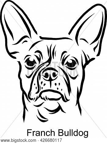 French Bulldog Portrait Dog In Line Style - Pet Portrait In Light Style Head Isolated On White