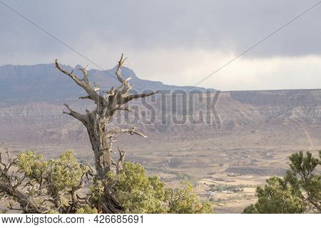Leafless Top Branches Of A Tree With A Blurry Background Of Hurricane Mesa In Utah