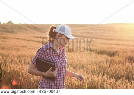 Young Woman Farmer Works On A Wheat Field In The Sun. Business Woman Plans Her Income In The Field.