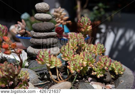 Zen Basalt Pebble Stone Pyramid And Succulent Plants. Perfect Floral Decoration.