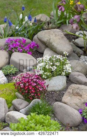 Beautiful Colorful Spring Rock Garden, Blooming Flowers