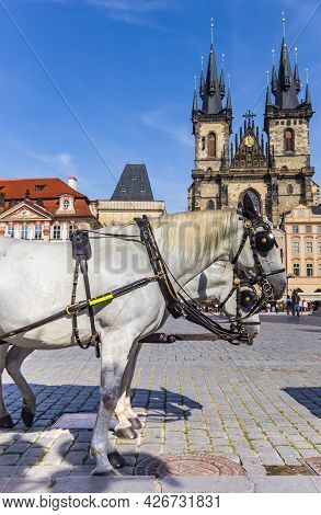 White Horse In Front Of The Tyn Church On The Old Town Square Of Prague, Czech Republic