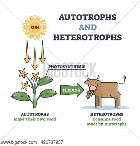 Autotrophs Or Producers And Heterotrophs Or Consumers As Nature Energy Source Division Outline Diagr