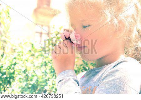 Sunlit  Little Girl Smelling Summer Flowers Of Wild Rose . Happy Child Enjoying Nature Outdoors.