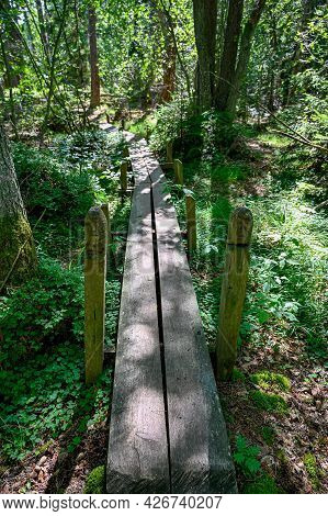 Footbridge Through Green Forest With Backlight And Shadows
