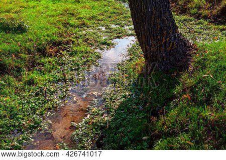 Brook Grass And Tree Trunk . Green Grass After The Rain . Flood In The Forest