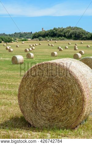 Stacks Of Straw - Bales Of Hay, Rolled Into Stacks Left After Harvesting Of Wheat Ears, Agricultural