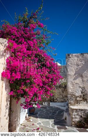 Sikinos Island, Greece. Bougainvillea Blossom In A Narrow Alley In The Old Town. Typical Greek Islan