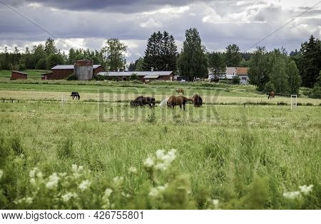 Horses Graze In The Pasture. Stable. Summer Background. Photo.