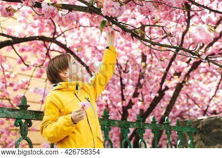 Smiling Preteen Boy Walking In Spring Park. Handsome Boy Posing Near Sakura Blooming Tree. Cute Boy