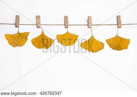 Autumn Background, Yellow Fallen Leaves Of Ginkgo Tree Hanging On Clothespins On A Rope, Falling Lea