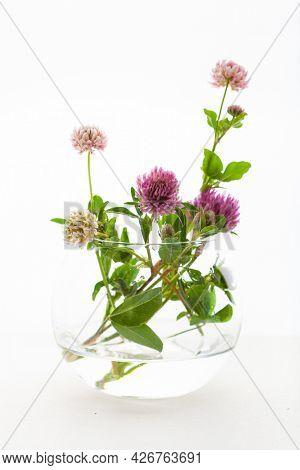 summer wild medical flowers and herbs in glass jar. alternative medicine